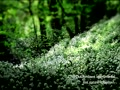 Original Chill Out/Ambient/Electronic Instrumental Album「lost nature」